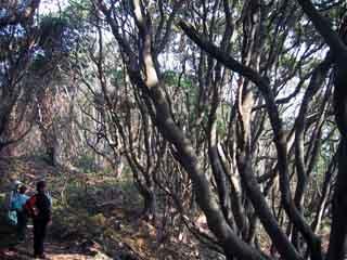Jougasakikansaturo